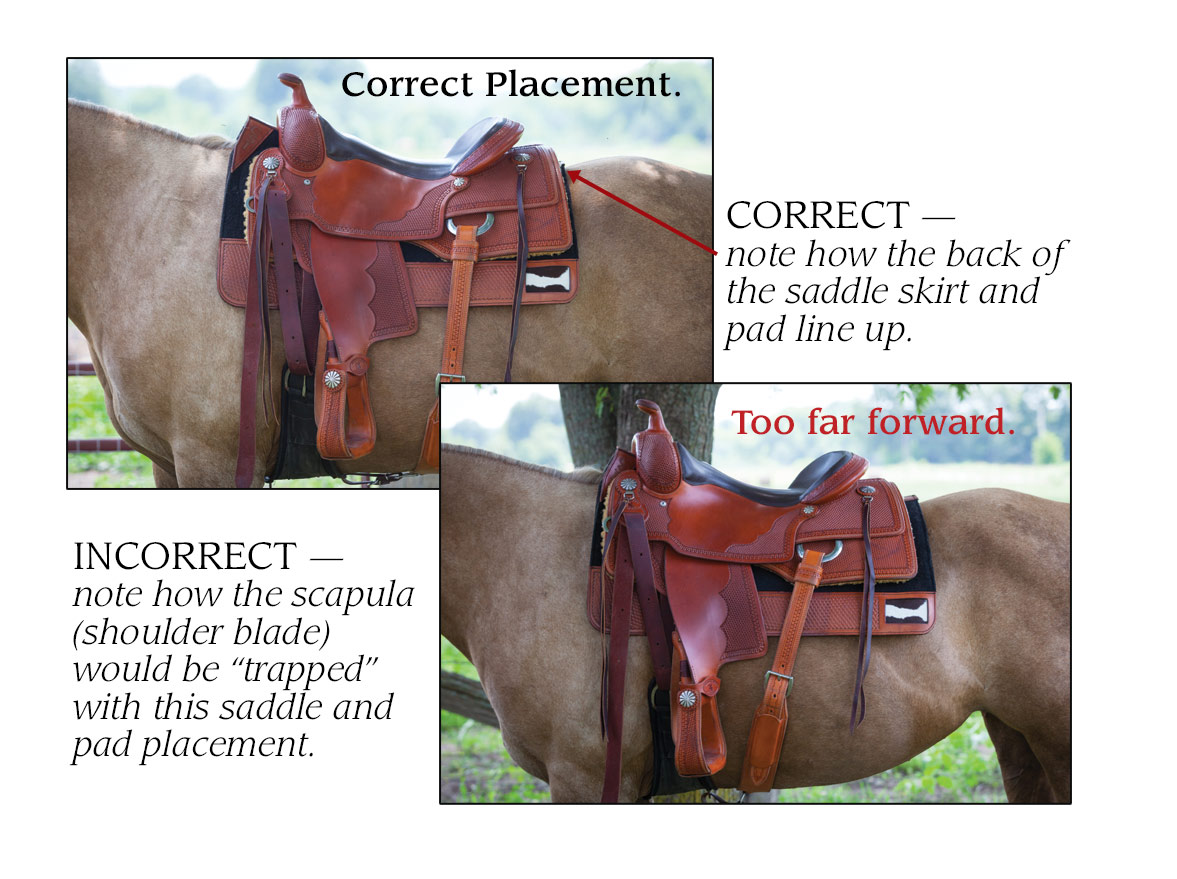 Using The Csi Saddlepad Saddle Fit Revolution
